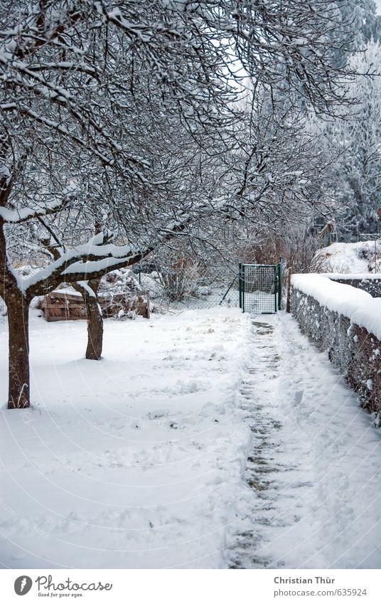 Gartenweg im Winter Ferien & Urlaub & Reisen weiß Baum Erholung Freude kalt Gefühle Schnee Wege & Pfade Stil braun Stimmung Schneefall Freizeit & Hobby
