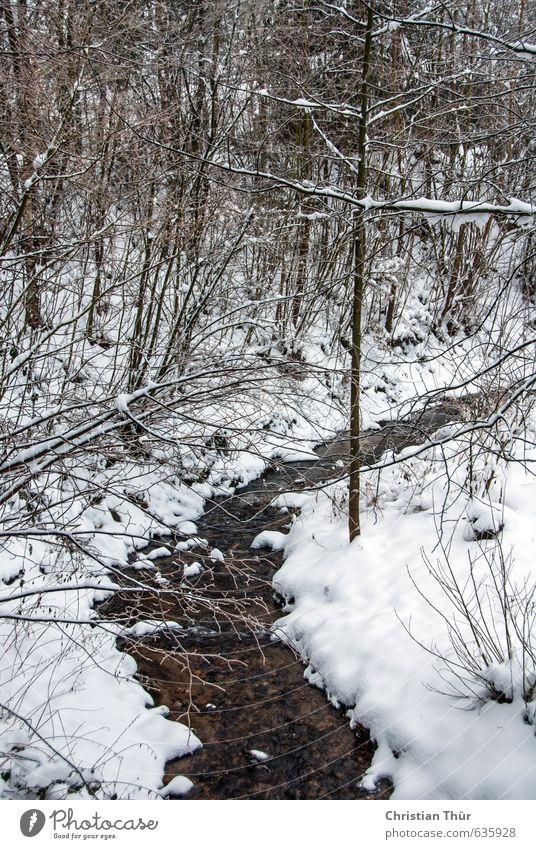 Bach im Winter Ferien & Urlaub & Reisen Tourismus Ausflug Schnee Umwelt Natur Landschaft Wasser Schönes Wetter Eis Frost Baum nass braun schwarz weiß