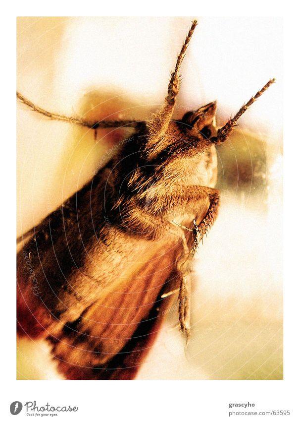 insect Insekt Käfer Motte