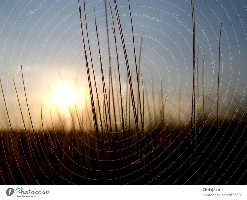 Abendsonne Licht Gerste Halm Physik Sommer Feld Landwirtschaft Agra Hintergrundbild ruhig Erholung Härchen Rotstich braun Sonnenstrahlen Sonnenlicht