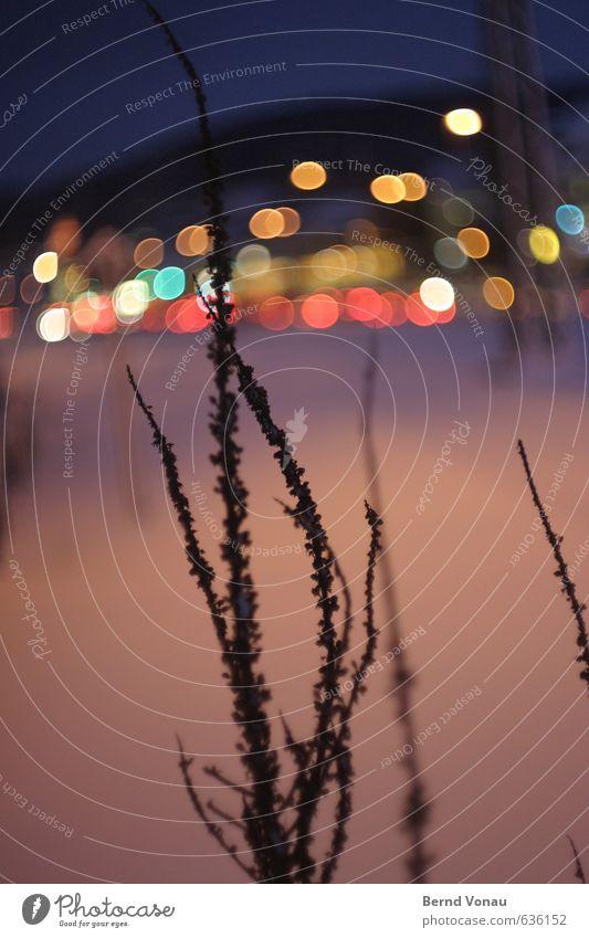 Lichter der Kleinstadt IV Himmel blau Pflanze ruhig Winter schwarz dunkel kalt Berge u. Gebirge Schnee Lampe Sträucher Kreis Spaziergang violett