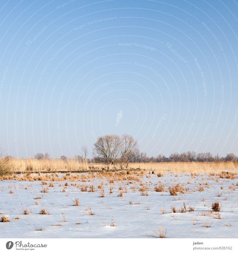 verdammt lang her. ruhig Schnee Landschaft Pflanze Erde Himmel Wolkenloser Himmel Frühling Winter Schönes Wetter Eis Frost Baum Gras Grünpflanze Wiese Feld kalt