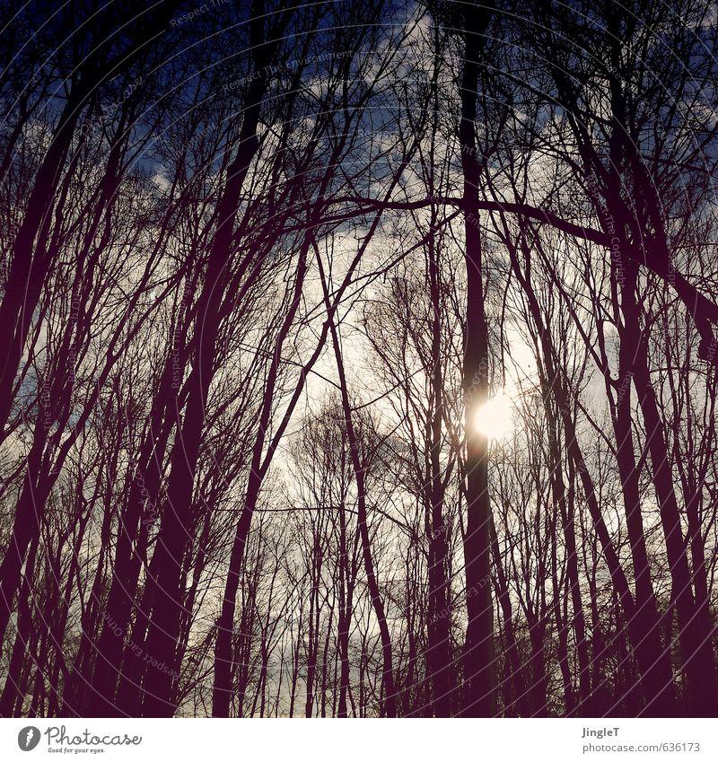blicklichtknipsen Himmel Natur blau weiß Pflanze Sonne Baum Landschaft Wolken schwarz Wald Umwelt Leben Frühling braun gold