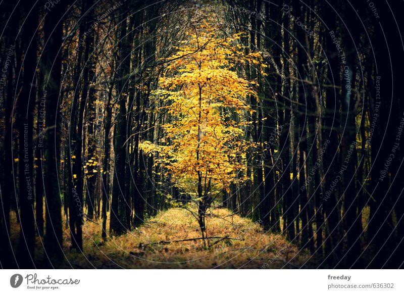 Der König Kunst Umwelt Natur Pflanze Herbst Baum exotisch Wald Urwald glänzend stehen leuchten elegant Erfolg Gesundheit groß lustig saftig schön stark gelb