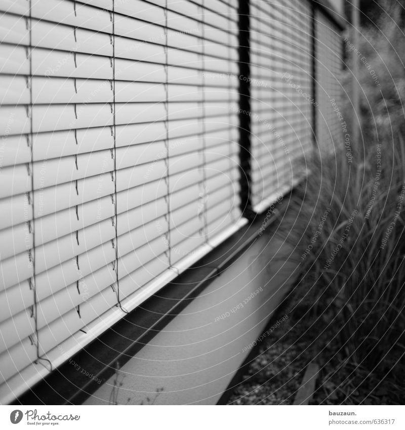 zugezogen. Häusliches Leben Hausbau Pflanze Sträucher Garten Einfamilienhaus Bauwerk Gebäude Architektur Mauer Wand Fassade Fenster Rollo Linie beobachten