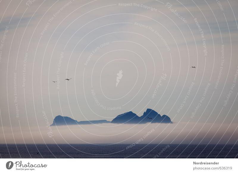 Blue Mountain Himmel Natur Ferien & Urlaub & Reisen Meer Landschaft Ferne dunkel Berge u. Gebirge Freiheit Felsen Vogel Wetter Nebel Klima bedrohlich Urelemente