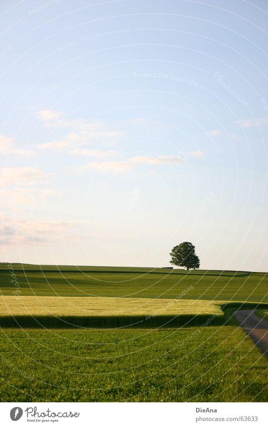 Naturteppich Natur Himmel Baum grün blau gelb Wiese Wege & Pfade Wärme Feld harmonisch Abendsonne Juni Hayfield