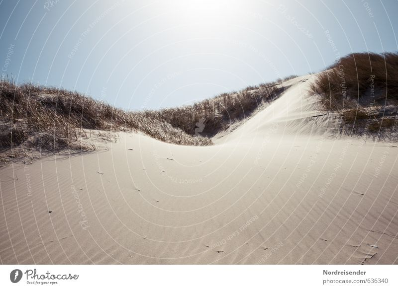 Dünen Natur Ferien & Urlaub & Reisen Sommer Sonne Meer Landschaft Strand Wärme Küste Gras Sand Wind Schönes Wetter Wolkenloser Himmel Fernweh