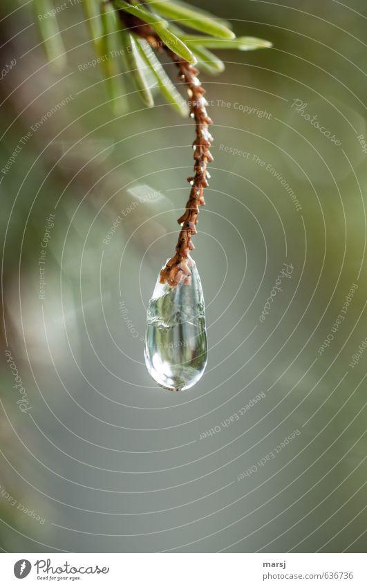 Einfach mal abhängen Natur Pflanze grün Wasser Einsamkeit Winter Traurigkeit Frühling natürlich glänzend Eis leuchten elegant genießen Wassertropfen fantastisch