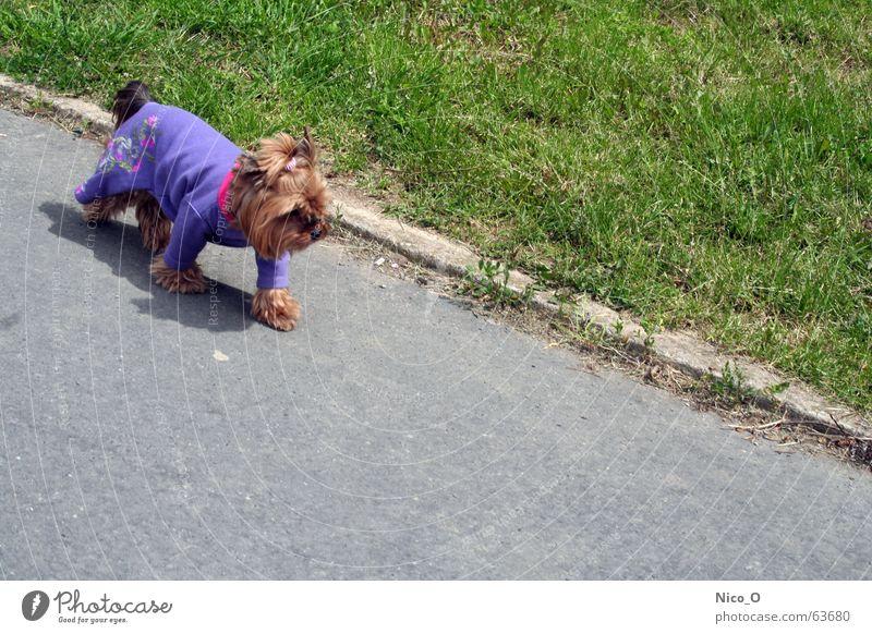 Keep on walking Hund rosa grün gehen Kitsch anziehen Tier Geschwindigkeit unterwegs violett Rasen laufen tierquälerei tierkleidung dog shadow Schatten trendy
