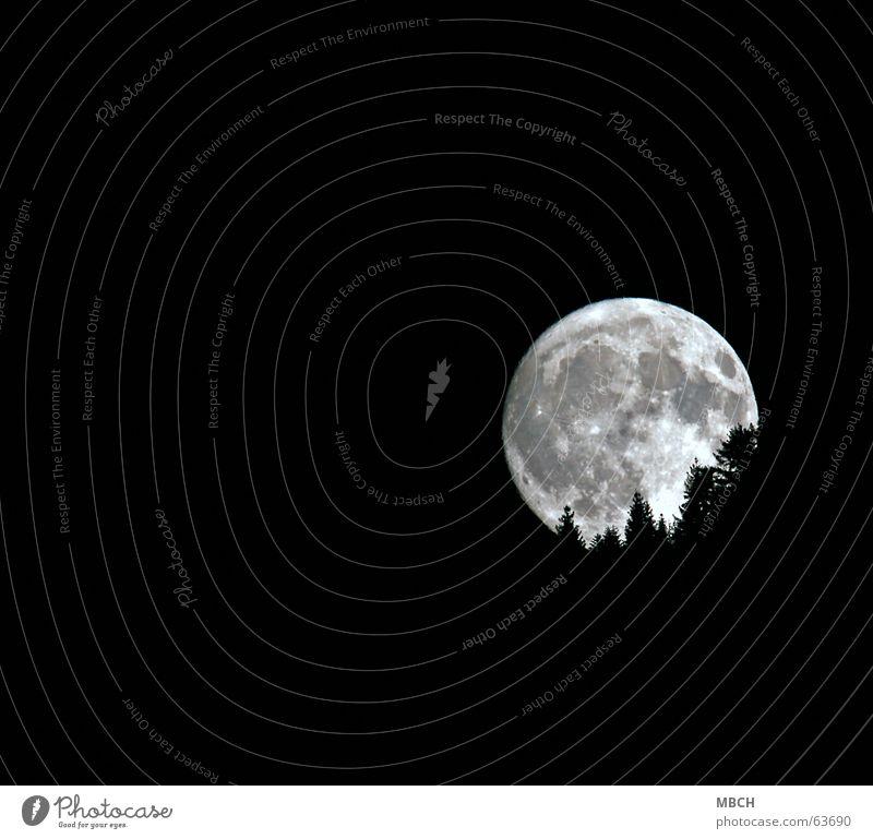 Mond 2 Baum hell Beleuchtung Tanne untergehen Vulkan Vulkankrater
