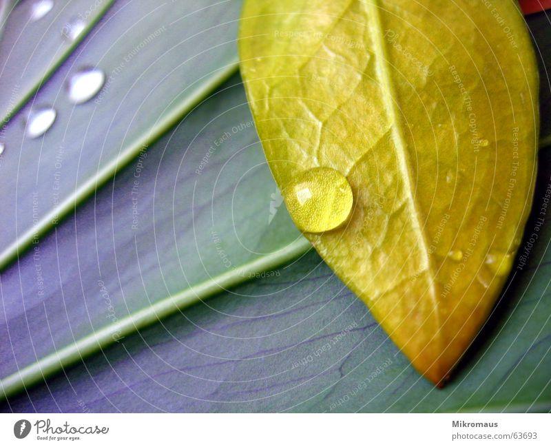 Tropfen oder Träne 2 Herbst Sommer Blatt Baum Pflanze Natur Grünpflanze Topfpflanze Gefäße Blattadern Wassertropfen Tränen Wellness nass Regen Trinkwasser Tau