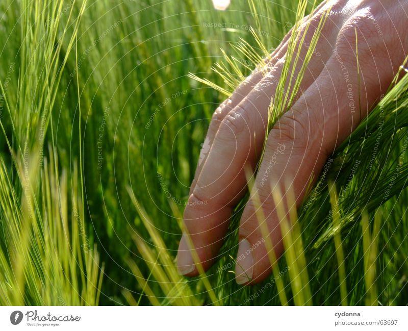 Wie fühlt es sich an ... Mensch Natur Hand schön Pflanze Sonne Sommer Gefühle Haut Finger neu streichen Getreide berühren Kontakt Korn