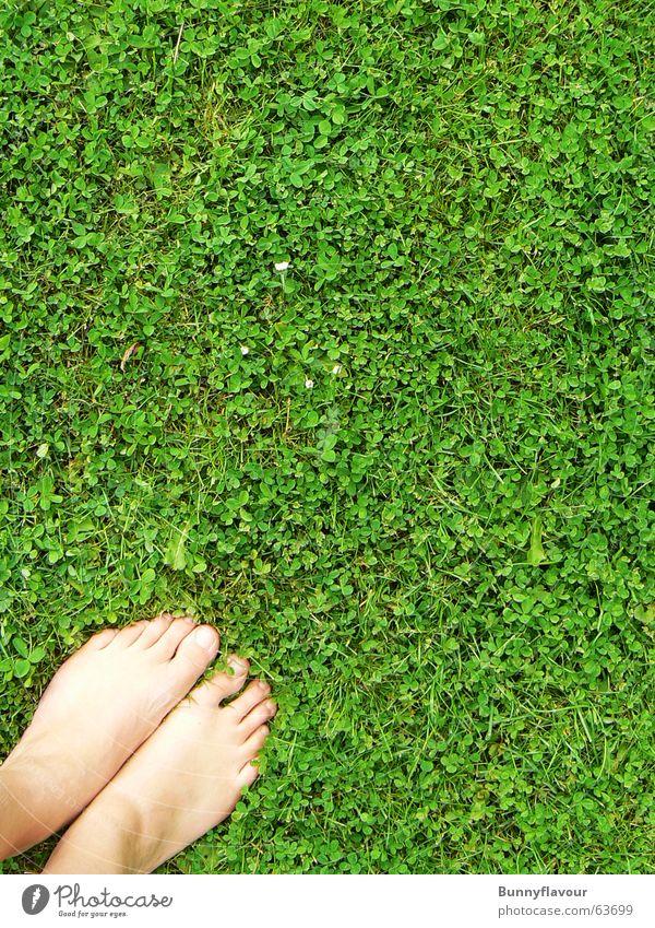 Gras grün Blatt Fuß Rasen Klee