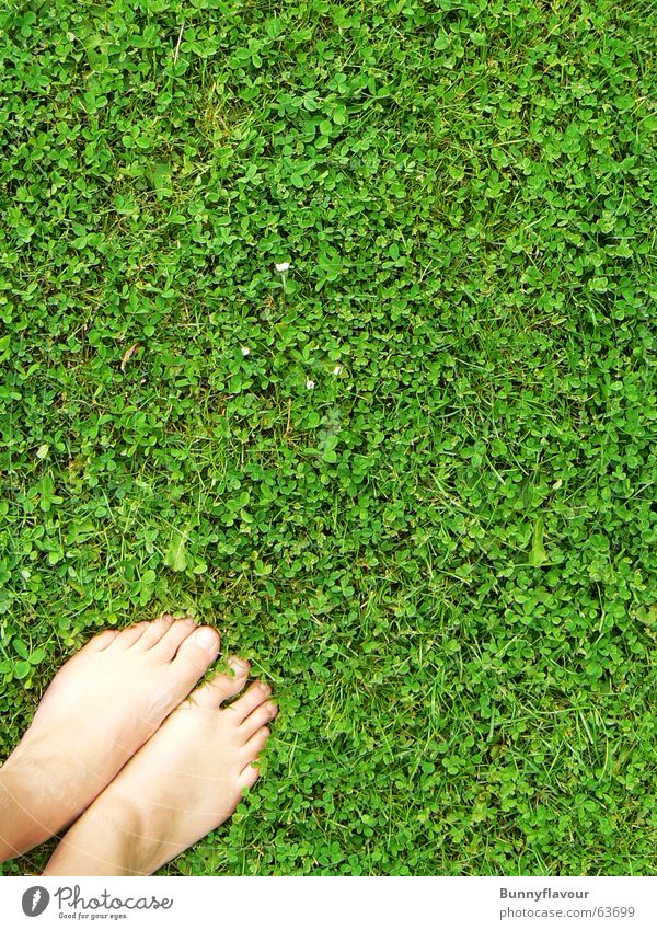 Gras grün Blatt Gras Fuß Rasen Klee