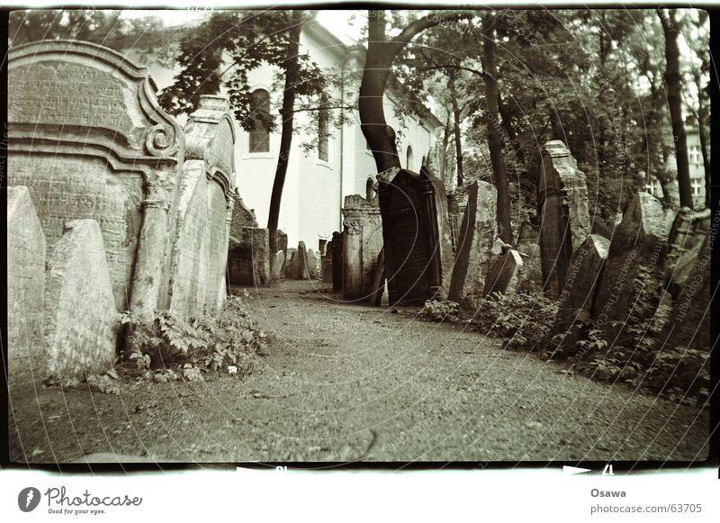Jüdischer Friedhof, Prag Baum ruhig Tod Wege & Pfade Vergänglichkeit Trauer Baumstamm Verzweiflung Gasse Gebet Friedhof Grab Gotteshäuser schweigen Prag Grabstein