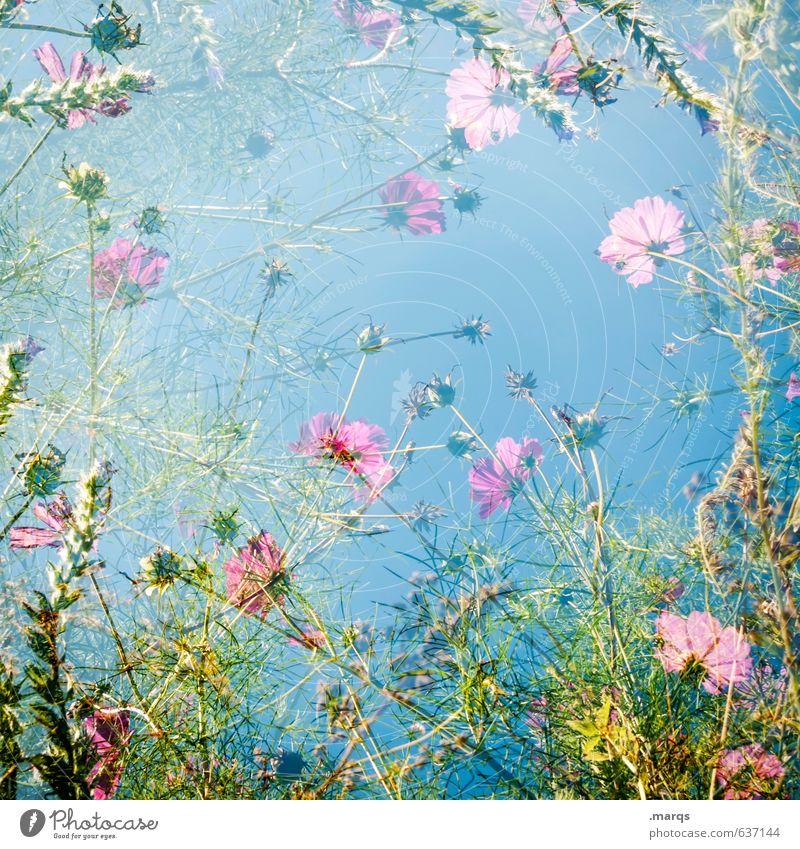 2000 | Wild Stil Natur Pflanze Wolkenloser Himmel Frühling Sommer Schönes Wetter Blume Wildpflanze Wiesenblume Blühend Duft Idylle Wachstum Gras Blüte Freude