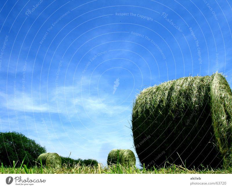 Heu oder Stroh. Das ist hier die Frage. Feld Strohballen Sommer ruhig Landwirtschaft Wiese Heuballen grün gelb Wolken rund Erholung Froschperspektive Himmel