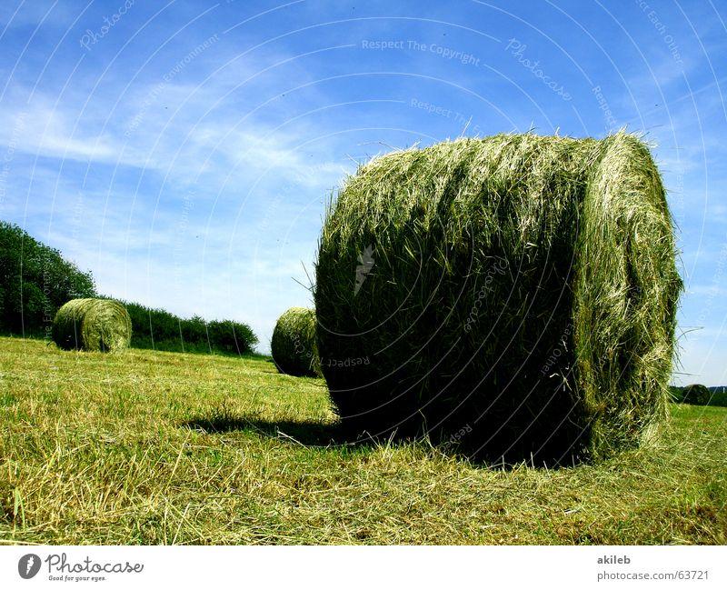 Heuballen Stroh Feld Strohballen Sommer ruhig Landwirtschaft Wiese grün gelb Wolken Erholung rund Himmel Wärme blau Natur clouds