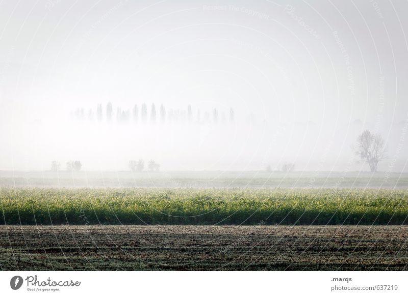 Bodennebel Umwelt Natur Landschaft Erde Himmel Horizont Sommer Klima Schönes Wetter Nebel Baum Feld frisch hell schön Stimmung Farbfoto Gedeckte Farben