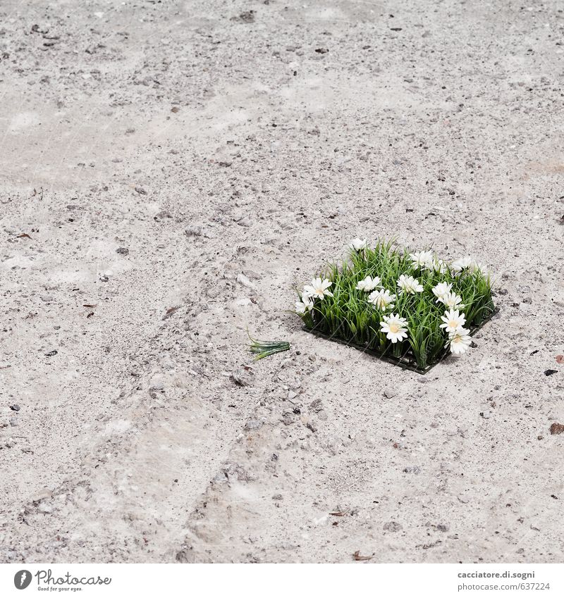 Nicht wirklich schön Umwelt Straße Dekoration & Verzierung Blumenstrauß Kunstblume Kunststoff einfach Kitsch trashig trist unten grau grün sparsam Langeweile