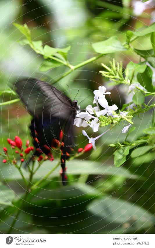 Butterfly motion Schmetterling Blume Baum Sträucher Blüte Blatt Sommer Insekt Schwerkraft Staubfäden Flügel Fühler Suche finden Natur fliegen Bewegung Nektar