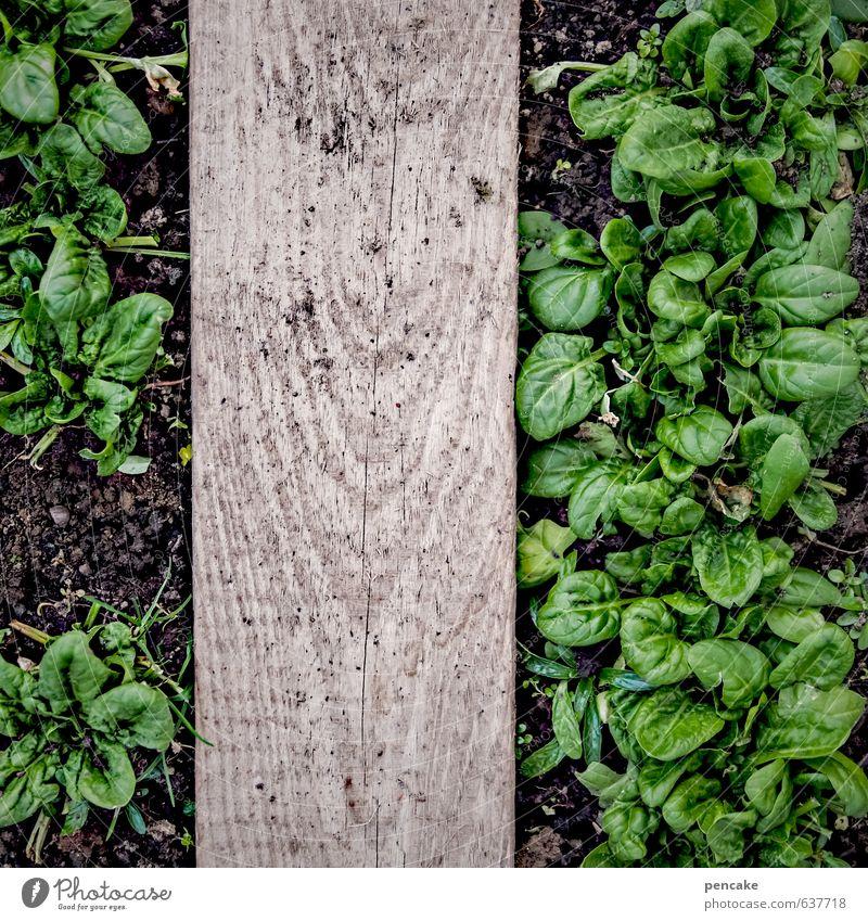 doping Gemüse Salat Salatbeilage Ernährung Natur Urelemente Erde Frühling Pflanze Blatt Erholung Essen genießen Wachstum Spinat Holzbrett Gewächshaus Ernte