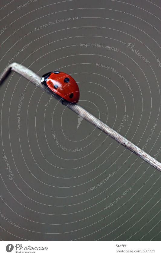 Streber Natur rot Bewegung grau Erfolg Zukunft Ecke Ziel Insekt aufwärts Karriere Käfer krabbeln aufsteigen Fortschritt Marienkäfer
