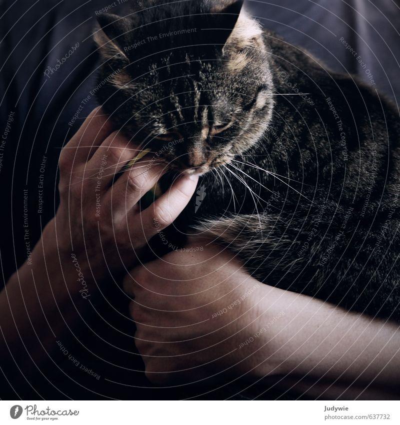Innig. Katze Mann Hand ruhig Tier Erwachsene Liebe Freundschaft Zusammensein Zufriedenheit Finger niedlich weich Sicherheit festhalten Wellness