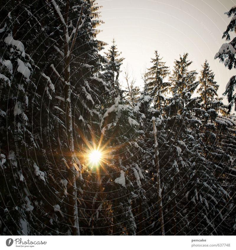 solar forest Himmel Natur Landschaft Winter Wald Wärme Schnee Frühling authentisch Urelemente Stern (Symbol) Zeichen gut Sonnenenergie Zukunftsorientiert