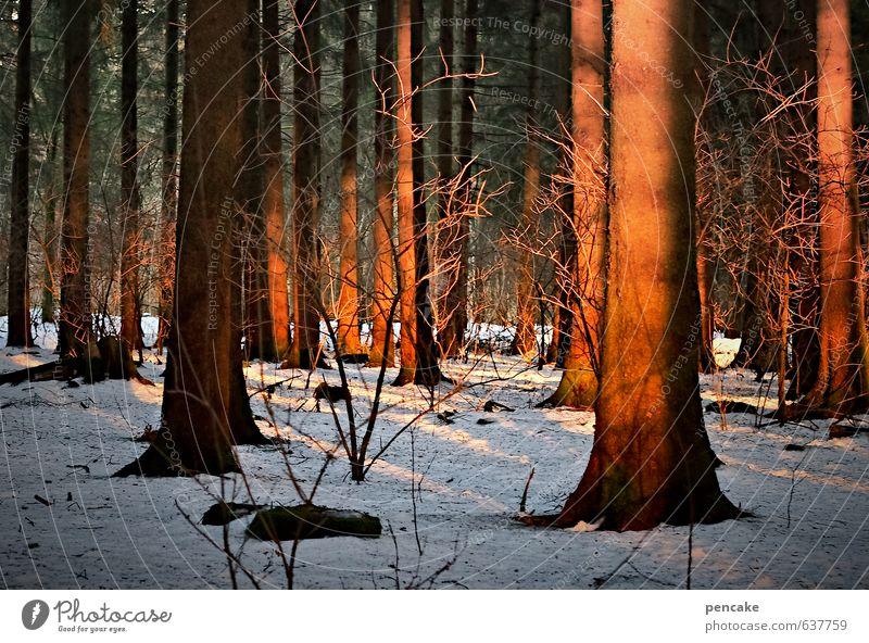scheinbar Natur rot Landschaft Winter Wald Wärme Gefühle Schnee Glück orange Zeichen Baumstamm Schattenspiel Glut Abendsonne