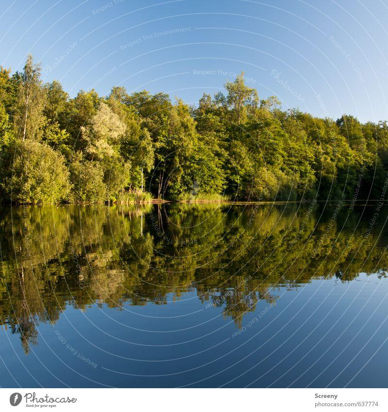 Mirror mirror... Natur Landschaft Wasser Himmel Wolkenloser Himmel Sommer Schönes Wetter Baum Sträucher Wald Seeufer Teich blau grün Stimmung Gelassenheit