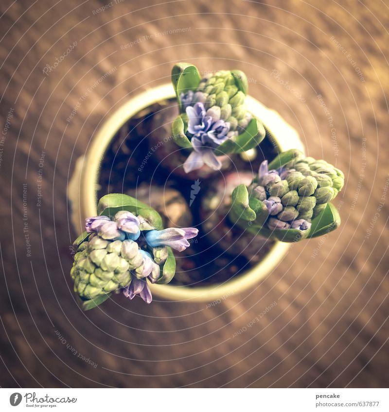 aufatmen Natur Pflanze Frühling Holz Glück Dekoration & Verzierung Fröhlichkeit Lebensfreude Zeichen violett Vorfreude Blumentopf Frühlingsgefühle rustikal