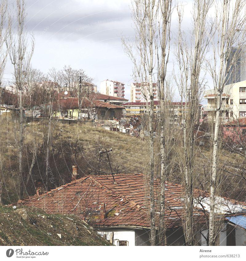 Hanglage alt Stadt grün Pflanze Baum rot Haus Traurigkeit klein braun groß einfach Dach einzigartig neu Ende