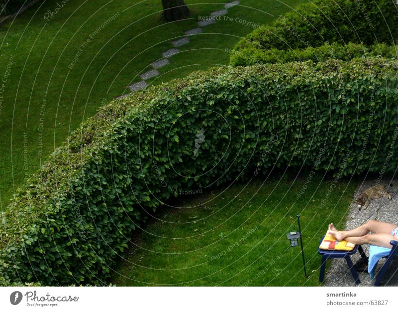 Sonnenbad mit Katze Sommer Erholung Garten Rasen Idylle Nachbar Voyeurismus Nachbargarten