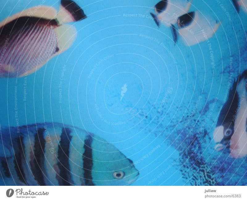 wenn ich nicht hier bin, bin ich... Wasser Meer Ferien & Urlaub & Reisen Verkehr Fisch tauchen Aquarium