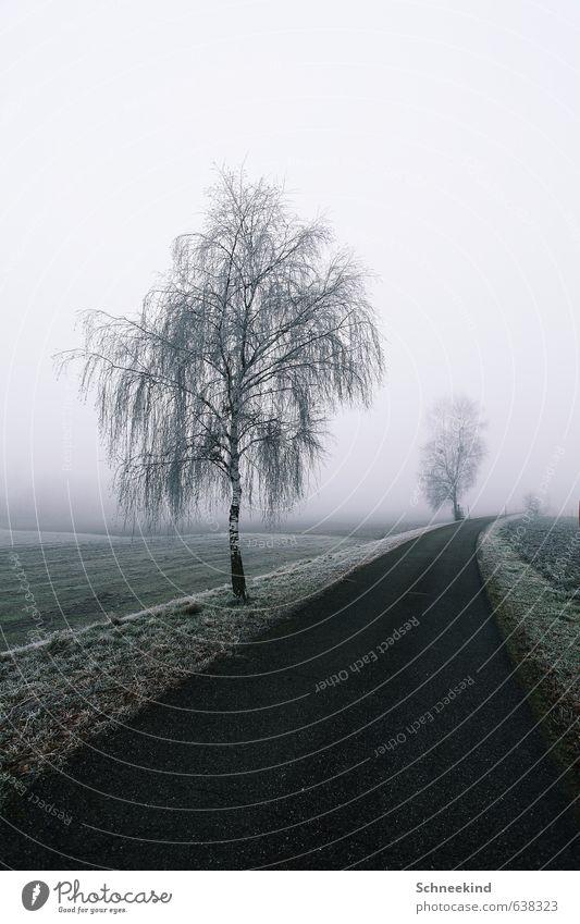 Stille Wege Natur Baum Einsamkeit Landschaft ruhig Winter kalt Umwelt Straße Wiese Schnee Wege & Pfade Gras Eis Park Feld