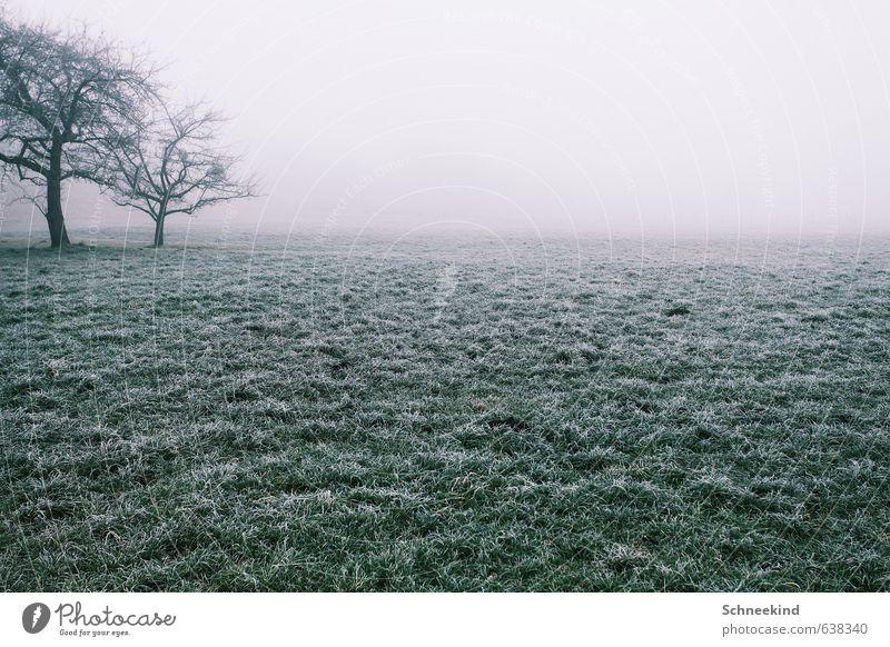 Lonesome Place Umwelt Natur Landschaft Herbst Winter Klima Nebel Eis Frost Pflanze Baum Gras Grünpflanze Wildpflanze Garten Park Wiese Feld kalt grün hell