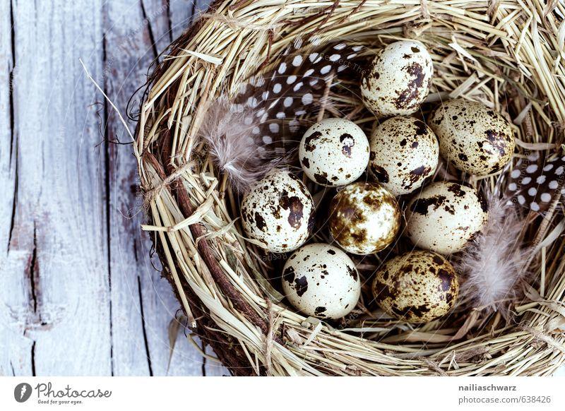 Wachteleier im Nest Natur blau schön Leben Frühling Holz Gesundheit natürlich Feste & Feiern braun Stimmung Idylle Fröhlichkeit Ernährung Warmherzigkeit