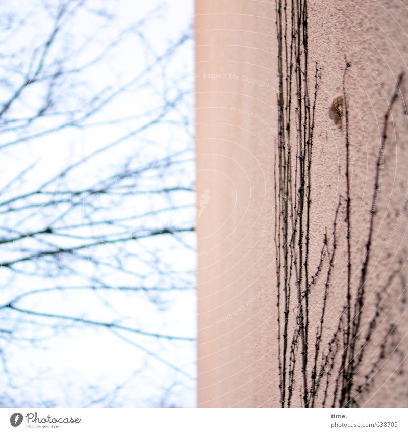 Autonomie und Bindung Natur Stadt Pflanze Baum Haus Ferne Umwelt Wand Leben Wege & Pfade Mauer Zeit Fassade elegant wild Ordnung