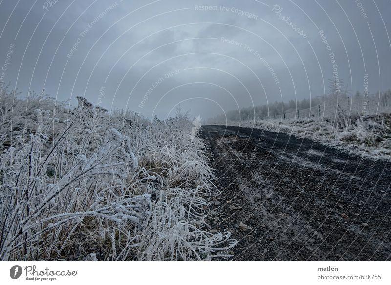 Reif Landschaft Pflanze Himmel Wolken Winter Wetter schlechtes Wetter Eis Frost Schnee Wiese Verkehrswege Straße Wege & Pfade grau schwarz weiß Raureif aufwärts
