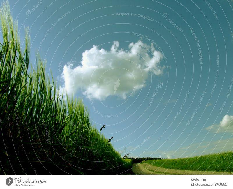 Bin schon abgehoben... Sommer Richtung Wolken Feld rollen Eindruck Wald Himmel Landschaft Wege & Pfade Korn Getreide Natur Wind Wetter
