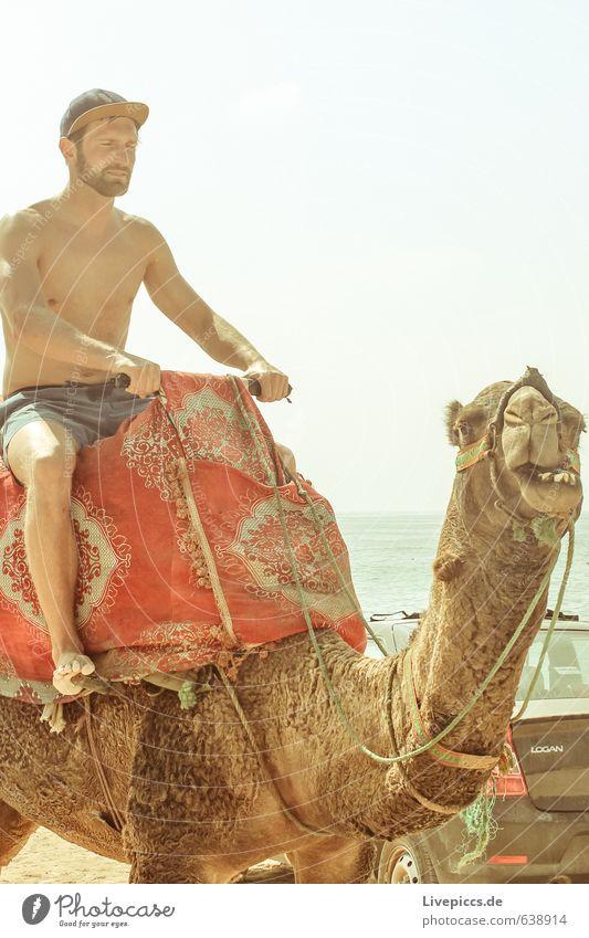 2 Kamele im Urlaub Ferien & Urlaub & Reisen Tourismus Ausflug Sommer Sommerurlaub Sonne Strand Meer Insel Wellen Mensch maskulin Mann Erwachsene Körper 1