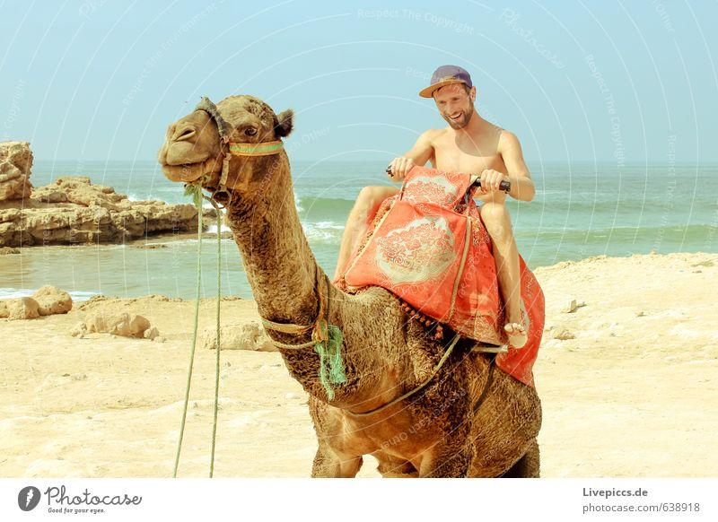 2 Kamele im Urlaub Mensch Himmel Natur Ferien & Urlaub & Reisen Mann Sommer Sonne Meer Landschaft Tier Erwachsene Umwelt Bewegung Küste Felsen maskulin
