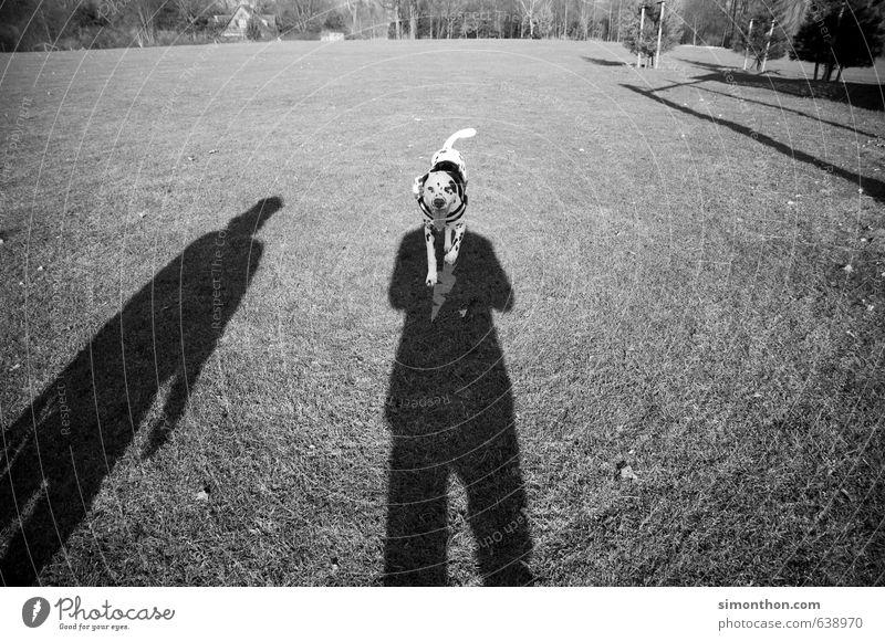 Hund Natur Garten Park Wiese Tier Haustier 1 Bewegung Freizeit & Hobby Spaziergang Dalmatiner Gassi gehen erzogen hörig Schatten Schwarzweißfoto Außenaufnahme