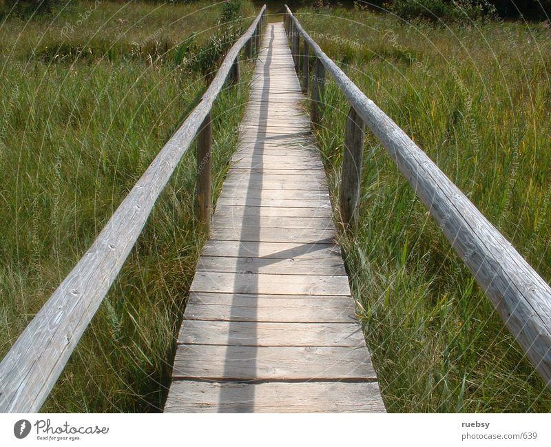 Der Weg ist das Ziel Natur Wiese Holz Wege & Pfade Brücke Dinge