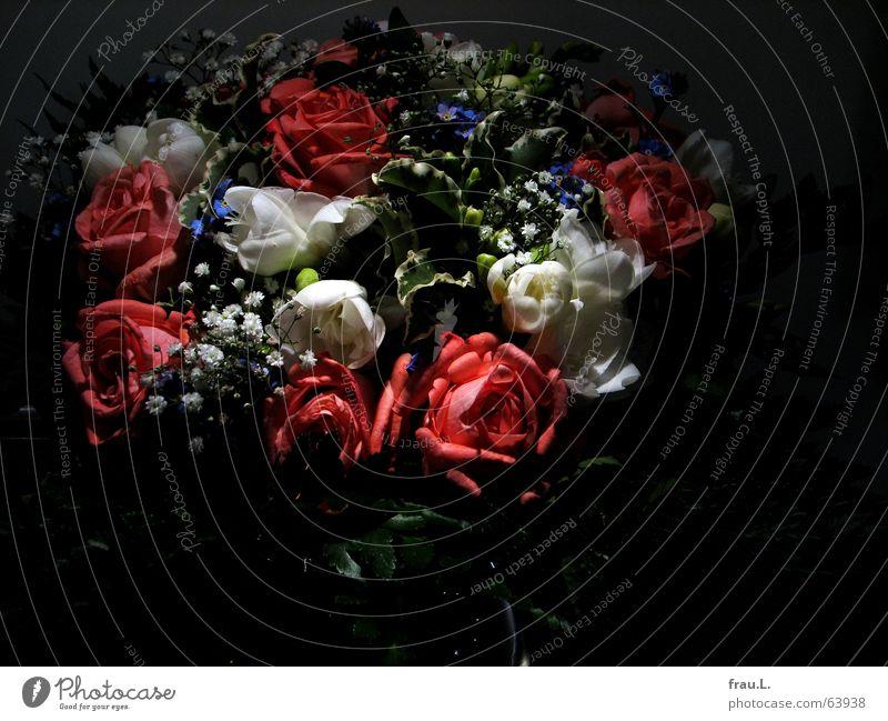 etwas kitschig Blume Freude Blatt dunkel Dekoration & Verzierung Romantik Rose Kitsch zart Blumenstrauß Stillleben danke schön dankbar Vergißmeinnicht verwöhnen Schleierkraut