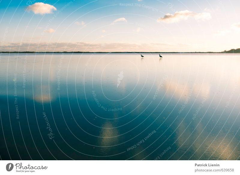 Auf Wasser laufen Himmel Natur Meer Erholung Landschaft Einsamkeit Wolken ruhig Tier Umwelt Küste Stimmung Wetter Eis Wildtier