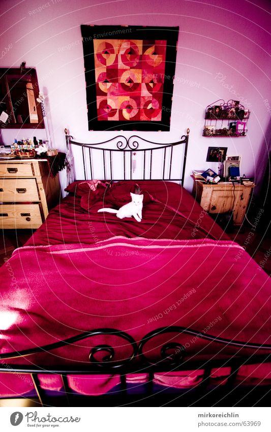 Pink Room II weiß rot Katze Raum rosa sitzen Rose Bett liegen violett rein Bild Mitte Tuch Nest magenta