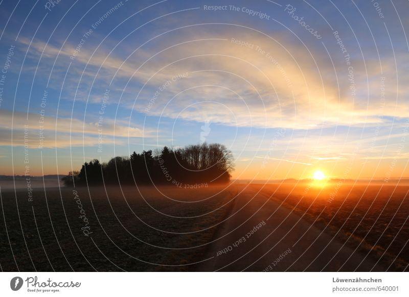 rise and shine! Landschaft Himmel Wolken Horizont Sonne Winter Schönes Wetter Nebel Baum Feld Wald Fußweg hell schön blau braun gelb orange schwarz Hoffnung